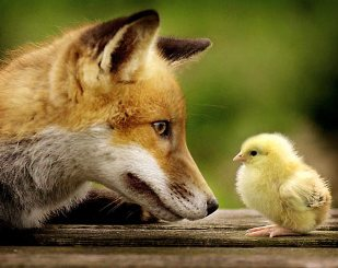 Is the fox guarding the henhouse?